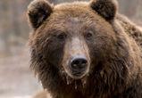 Владелец медведя, растерзавшего пенсионера, попытался обжаловать приговор