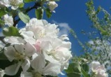 Суд оставил участок яблоневого сада в Воронеже государству