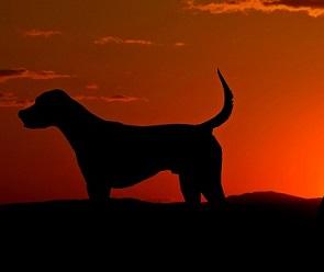В Воронеже ищут водителя, насмерть сбившего двух породистых собак