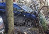 В Воронеже ураган обрушил столбы и деревья, повредил машину и дома: фото, видео