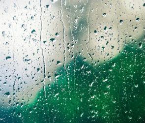 Пасмурная и дождливая неделя ожидает воронежцев