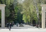 В воронежском парке «Динамо» на три дня запретят парковку