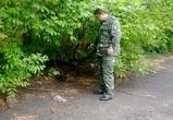 Воронежцы на Infiniti в масках обстреляли полицейских