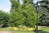 В Воронеже появится сквер имени Сергея Рахманинова
