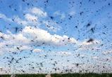 В Павловском районе Воронежской области проведут допобработку от комаров