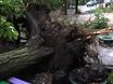 В Воронеже ураган...