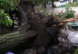 В Воронеже ураган срывал кровли, ломал деревья и обрушивал их на машины - фото