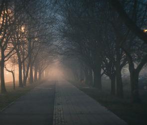 В Воронеже «галантный» грабитель ночью проводил до дома женщину