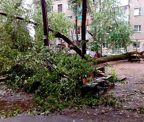Фото урагана в Воронеже: рухнувшие деревья, разбитые машины и детские площадки