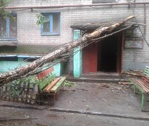 Воронежцы остались без света из-за упавшего во время бури дерева
