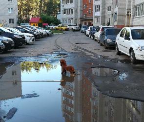 О глубокой яме на дороге воронежцев предупреждает лошадка