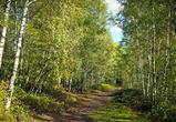 Площадь планируемого в Воронеже «зеленого пояса» сократилась на 400 га