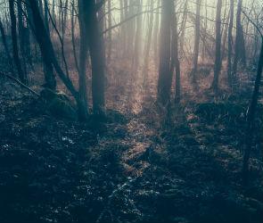 36-летнего воронежца задушили и спрятали в лесу за городом