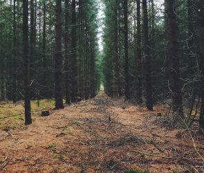 Длинные выходные будут в Воронеже прохладными и облачными