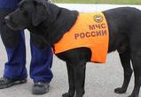 В Воронеже пришлось эвакуировать детскую больницу, причины ЧП выясняются