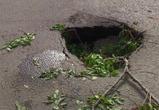 Водители сообщают о жуткой яме в новом асфальте на левом берегу Воронежа (фото)