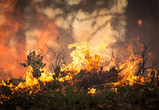 В воронежском лесничестве спасатели четыре часа боролись с крупным пожаром