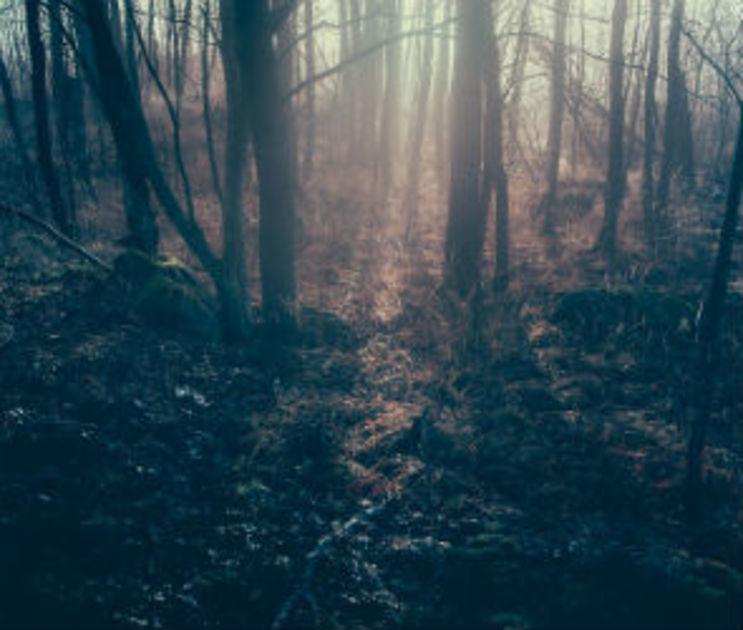 Жестокие воронежские грабители застрелили попутчика и закопали его труп в лесу
