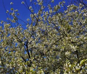 У «Выбора» отняли земли яблоневого сада на Шишкова