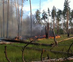 В воронежском заповеднике два дня бушевал сильный пожар, охвативший 40 га (фото)