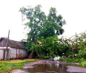 Ураган под Воронежем: сломаны деревья и столбы, обесточены дома, есть раненые