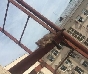 В Воронеже спасли куницу, застрявшую на пожарной лестнице - видео