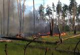 Озвучена сумма ущерба от страшного пожара в Воронежском заповеднике