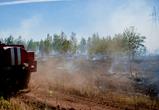 Появились фото крупного пожара у пляжа  в микрорайоне Боровое в Воронеже