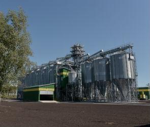 Под Воронежем появится крупный завод по производству семян