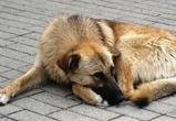 В Воронеже женщина не может выйти из квартиры из-за агрессивной собаки