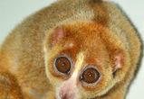 Воронежцев приглашают на контактную выставку обезьянок