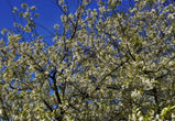 Дело о мошенничестве с землями Яблоневого сада дошло до суда