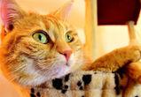 Воронежцев приглашают на бесплатную фотовыставку кошек