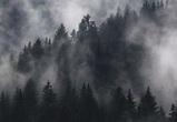 Азорский антициклон принесет в Воронеж радиационный туман и повышенное давление