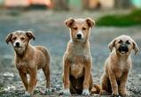 Почти 3 млн рублей выделят на борьбу с бездомными животными в Воронеже