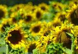 В Воронежской области объявили штормовое предупреждение на 16 августа из-за жары