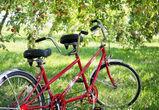 Воронежская фирма снова не смогла отсудить участок яблоневого сада у государства