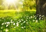 Жаркие и солнечные выходные ожидают воронежцев