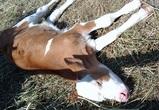 Воронежцы сообщили об «умирающих» животных-экспонатах выставки «Город-Сад»