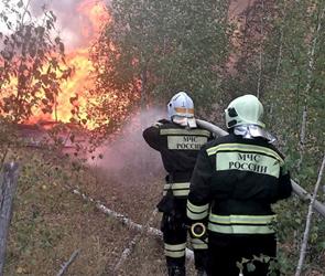 Пожар на полигоне Погоново и в лесу под Воронежем охватил 100 га (фото, видео)