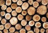 За вырубку деревьев для сарая житель Воронежской области заплатит крупный штраф