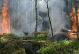 Воронежцы сообщают о запахе гари после тушения крупного лесного пожара в Сомово