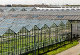 В Воронежской области построят высокотехнологичные теплицы за 15 млрд рублей