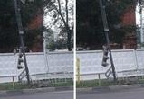 Воронежцы сфотографировали «приунывший» светофор