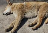 Воронежцы сообщают об убийстве собак на улице Дорожной