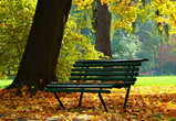 Начало недели порадует воронежцев теплой и солнечной золотой осенью