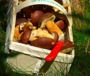 Под Воронежем две девушки пошли за грибами и заблудились в лесу