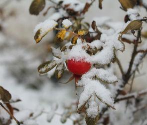 Первый снег может выпасть в Воронежской области в конце рабочей недели