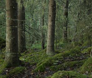 Воронежские волонтеры продолжают поиск заблудившейся в лесу пенсионерки