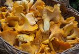 Воронежская полиция искала семью грибников с ребенком, заблудившуюся в лесу